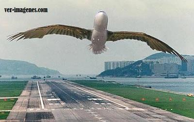 Avión-ave