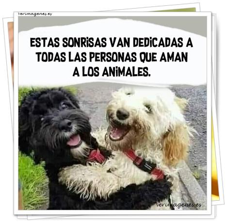 Frases de Animales