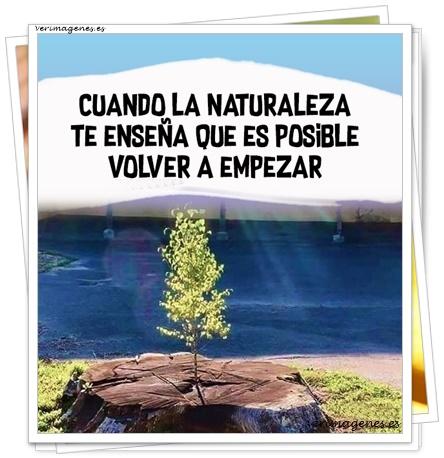 Frases de Naturaleza
