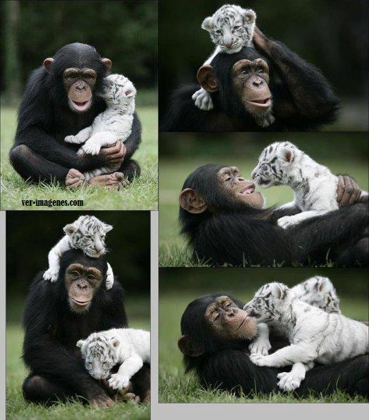 Jugando con su mascota