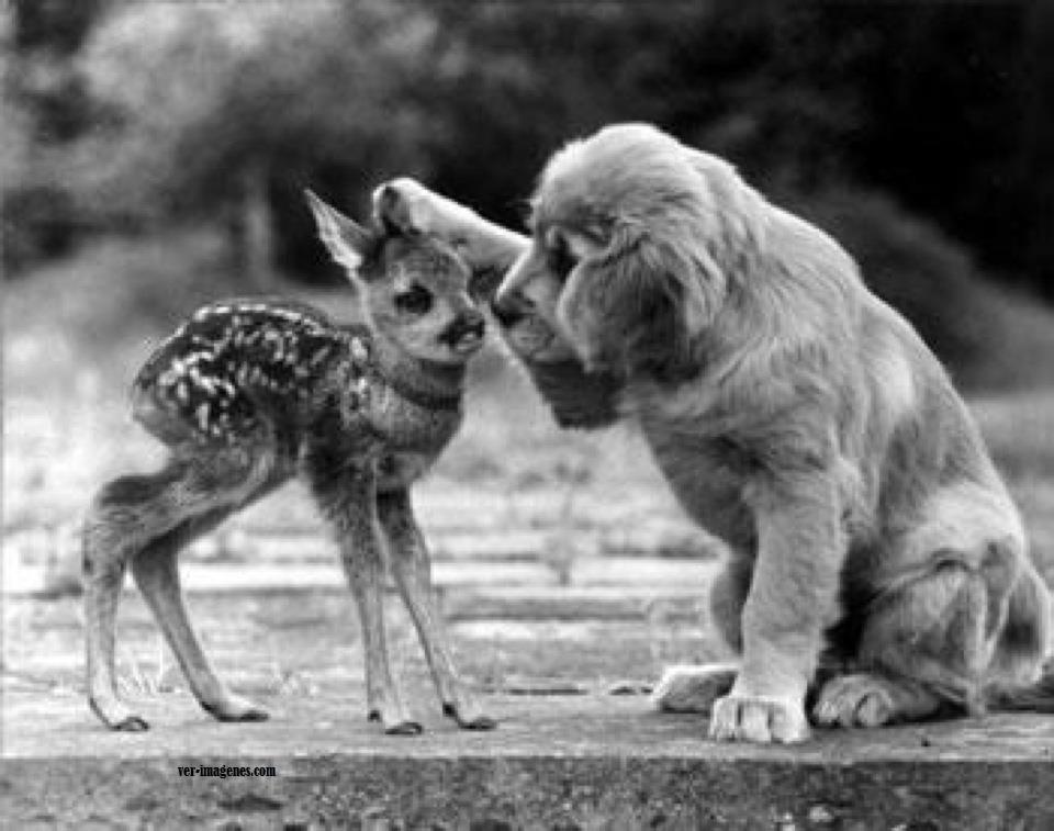 Perro y bamby