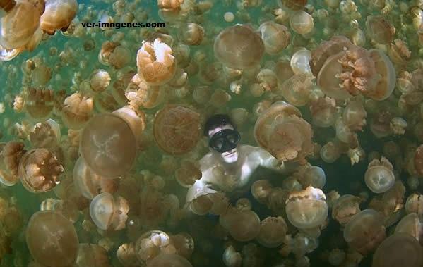 Nadando con medusas
