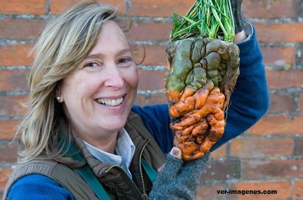 Una zanahoria gigante que tiene forma de balon de rugby