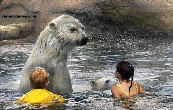 Imagen Niños bañandose con osos polares salvajes en Ontario, Canadá
