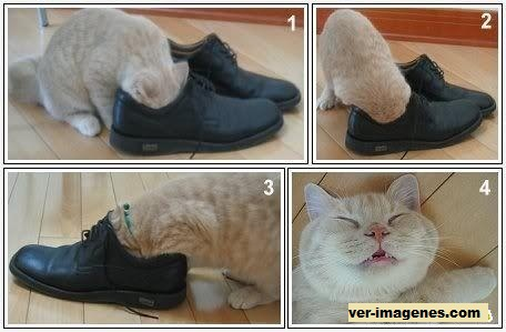 Los efectos de un zapato