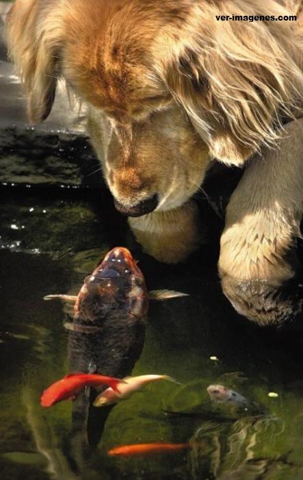 Un curioso encuentro entre dos especies muy distintas…