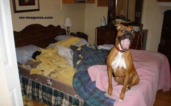 Imagen Mira! Le hice una pequeña mejora a tu cama!