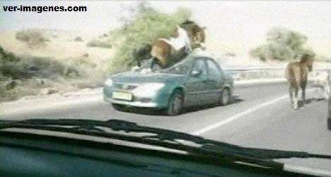Imagen El caballo que intentó sin éxito saltar sobre el coche