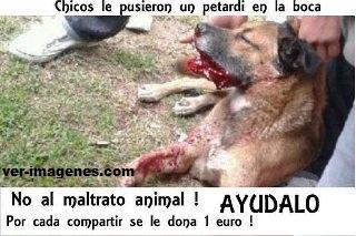 No al matrato animal