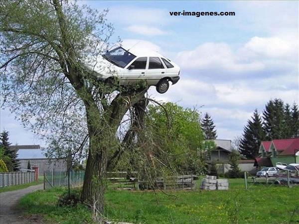 Insólito: Al despertar encontró su auto sobre un árbol