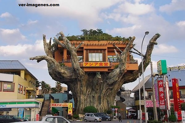 El restaurante en la casa del árbol en okinawa, japón