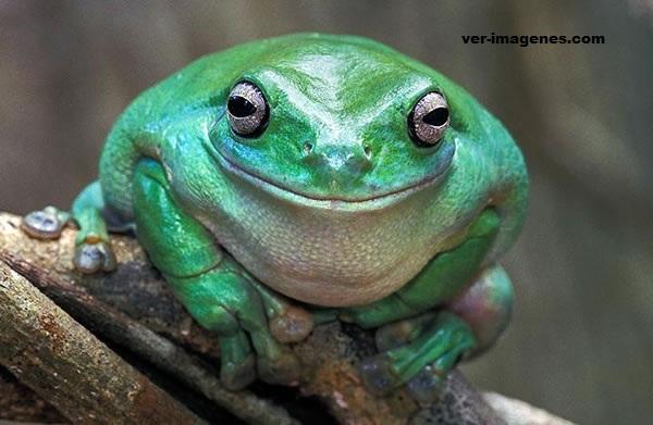 Imagen Animales sonrientes te invitan a sonreír