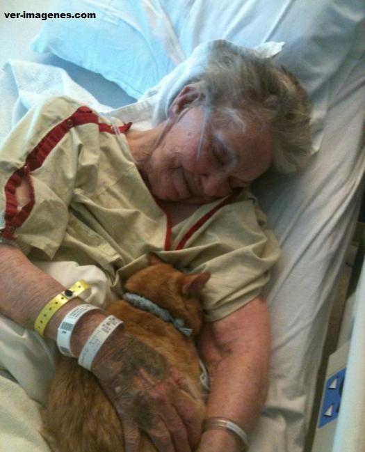Abuelita en el hospital viviendo sus últimos días feliz con su gato