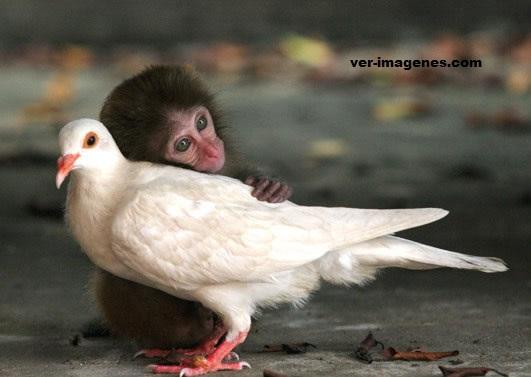 Amor entre animales