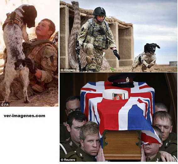 Amistad incondicional: Un soldado muerto, cuyo perro murió de tristeza