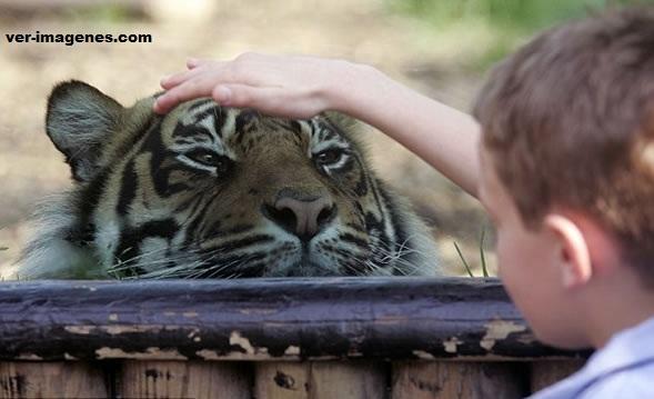 Imagen La amistad entre un niño y una bestia.
