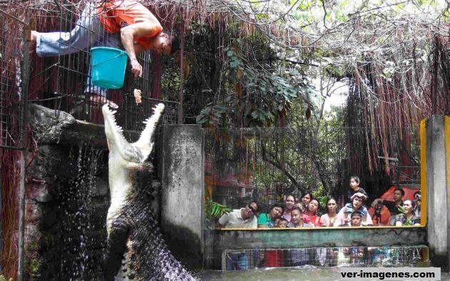 Alimentando al cocodrilo!