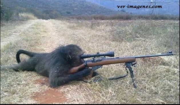 Un mono francotirador!