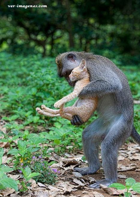 Imagen Mono con un gato de mascota!