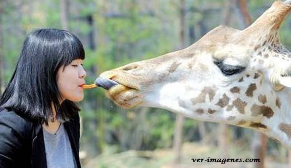 ¡ compartiendo comida con una jirafa !