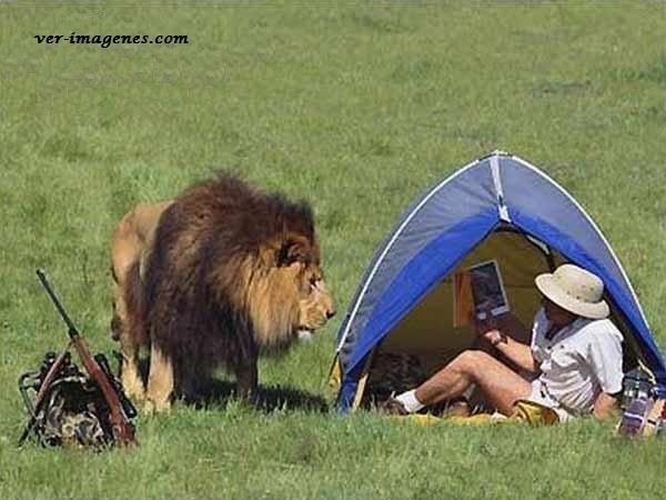 Acampando con un león