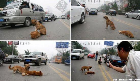 Un perro leal con su amigo