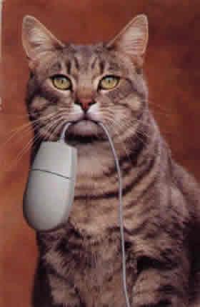Gato cazando raton