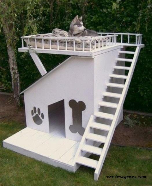 Casita de perro con terraza!