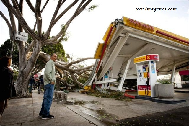Impacto: arbol aplasta gasolinera