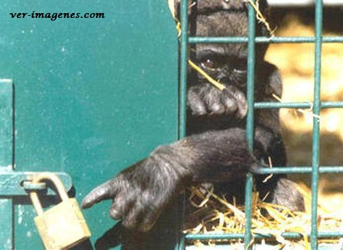 Mono pidiendo ayuda