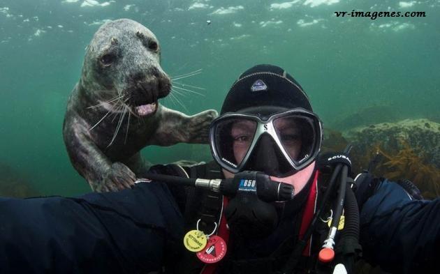 Un amigo inesperado en la foto bajo el mar