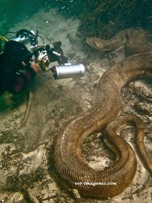 Frente a frente con una enorme serpiente marina, eso si es tener valor!