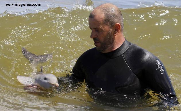 Enseñándole a nadar a un delfín bebé
