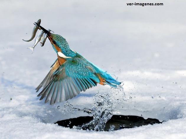 El martín pescador si que es un buen pescador