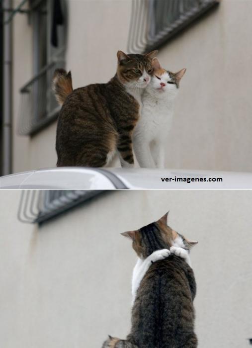 Un gato y su gatita teniendo un momento romántico