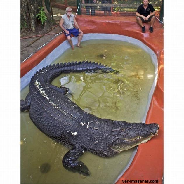 Este si es un enorme cocodrilo