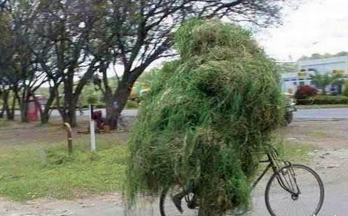 Transportando pasto