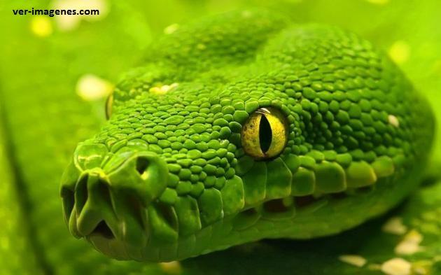 Una hermosa serpiente muy muy cerca