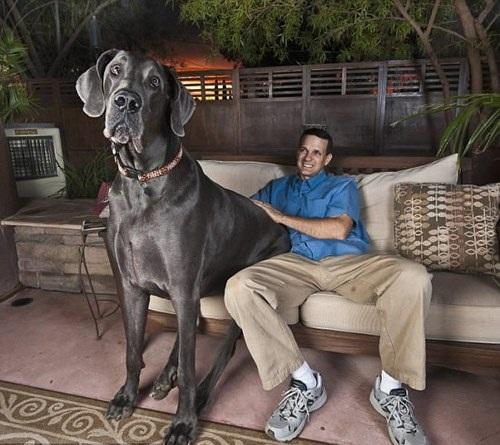 Perro guardian