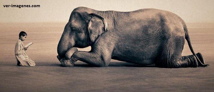 Niño leyendo a un elefante