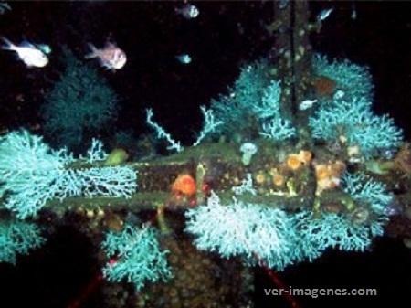 En el golfo de méxico, descubren corales a mayor profundidad.