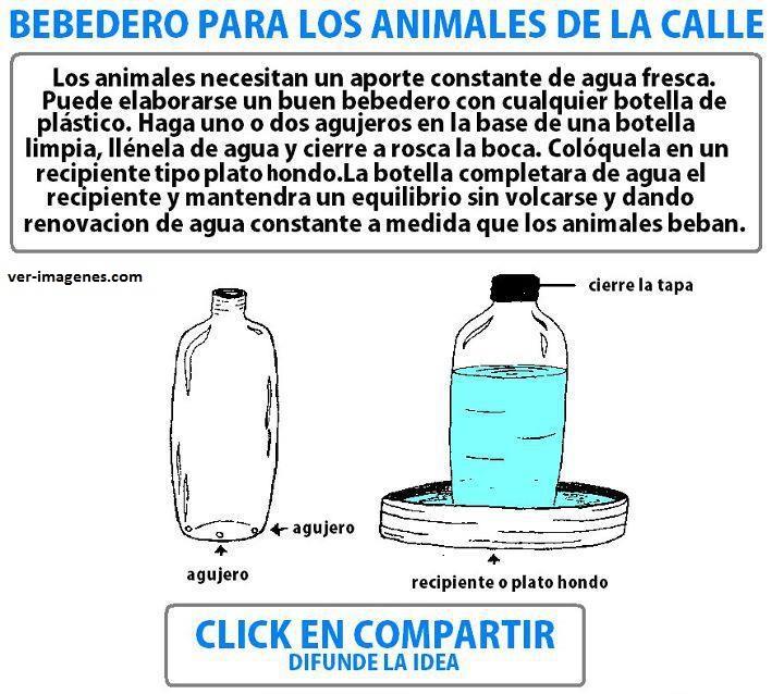 Bebedero para animales