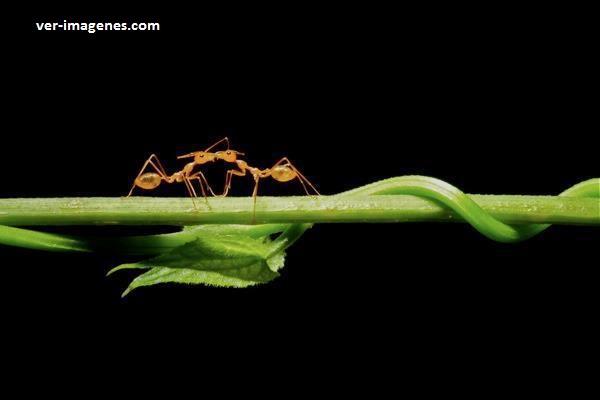 El beso de las hormigas
