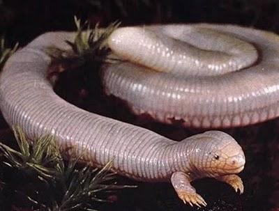 Gusano o serpiente?