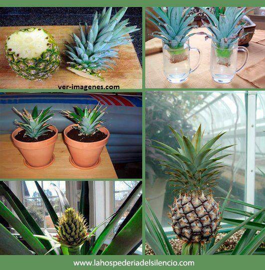 Sacar una planta con una piña