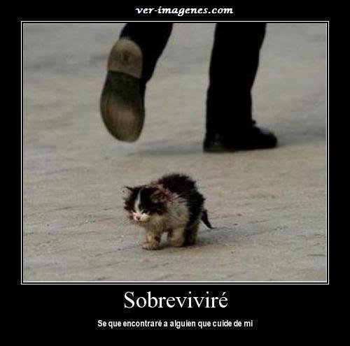 Sobrevivire ...