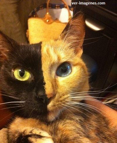 Curioso gato