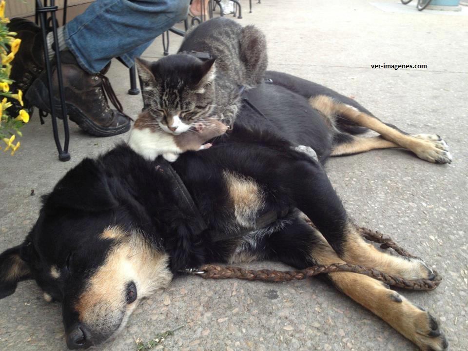 Un perro, un gato y una rata!
