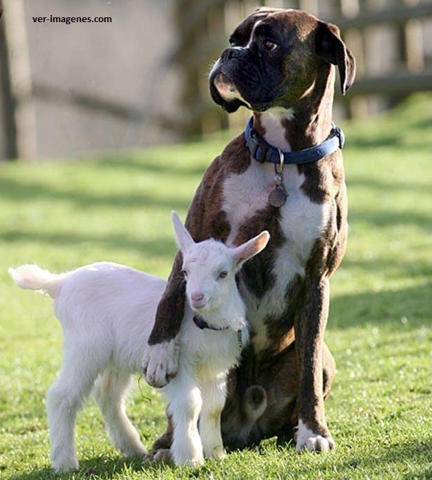 Protegiendo a su amigo