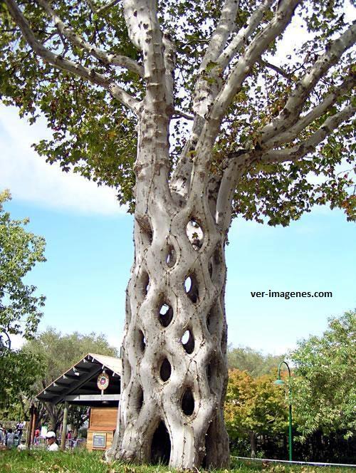 Espectacular árbol